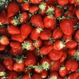 History of Strawberries